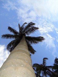 Photo: By Shanmugamp7 via Wikimedia Commons