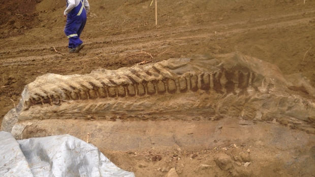 A 30-metre-long fossilized dinosaur was found by a pipeline crew working southwest of Spirit River, Alta., on Tuesday. (Supplied)