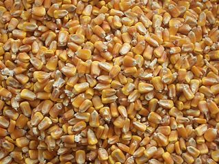 The U.S. is the world's largest corn exporter, and China is its No. 3 customer. / Image: Wikimedia Commons