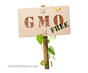 Gmo-Free-Garden-Crop-Sign