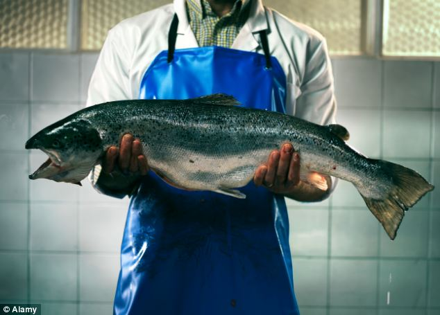 'Frankenfish' are genetically modified salmon created by company AquaBounty which grow at twice the rate of wild Atlantic Salmon, and are constantly hungry (file picture)