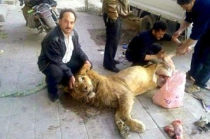 Pictures of a lion reportedly killed for food were posted online