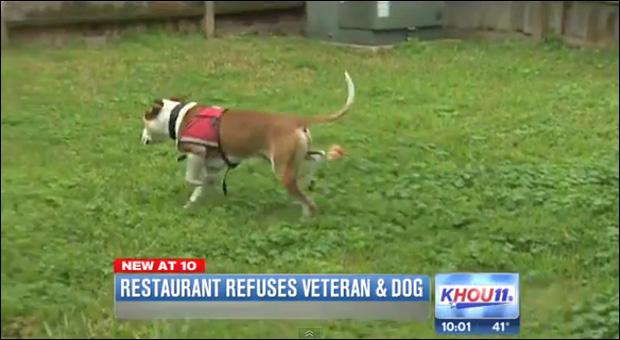 Ohayon's service dog 'Bandit' / Image via KHOU