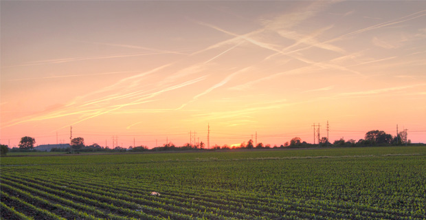 90% of all alfalfa grown in the U.S. is covered in Round Up Ready chemicals. Credit: Mike Miley / Flickr