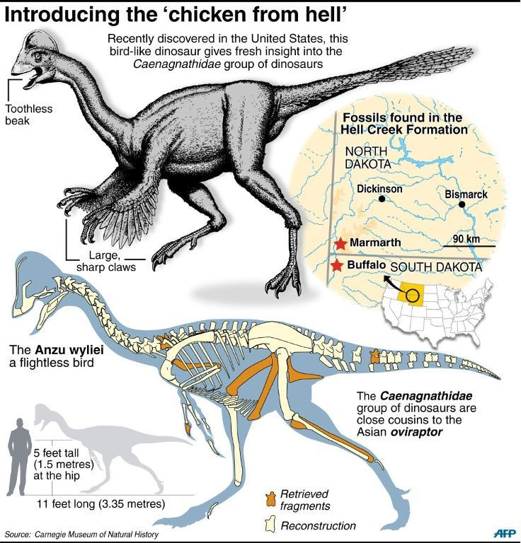 Factfile on a newly discovered bird-like dinosaur, known as 'chicken from hell', which was big as a human (AFP Photo/Patrice Dere, J.Jacobsen)