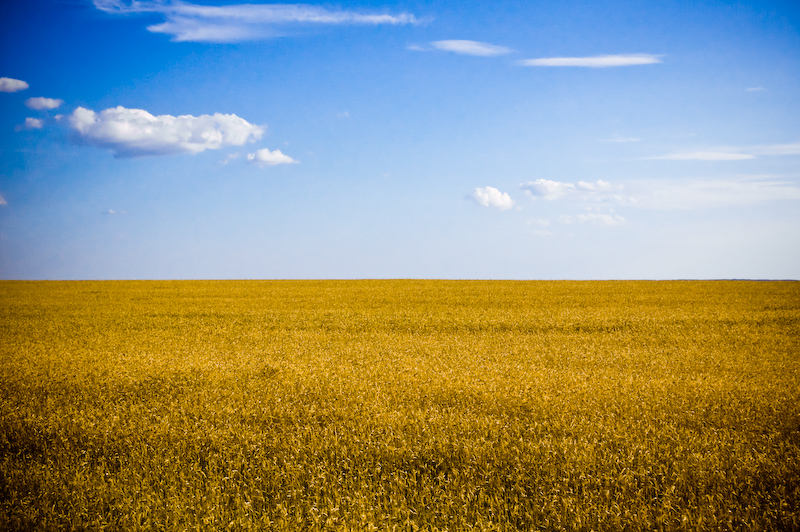 """In many ways, the farmland of Ukraine was the backbone of the USSR. Its """"fertile black soil"""" generated over a quarter of the USSR's agriculture. It exported """"substantial quantities"""" of food to other republics and its farms generated four times the output of """"the next-ranking republic."""""""