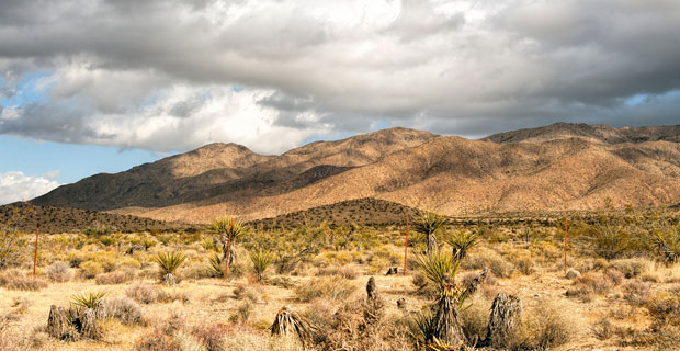 The Mojave Desert covers large portions of California, Nevada, Utah and Arizona. Credit: viscountsin / Flickr