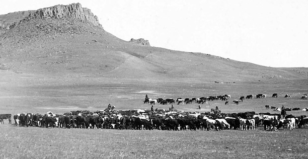 Cattle Roundup, Great Falls, MT, album by Geo B Bonnell, c1890 via Wikimedia Commons.