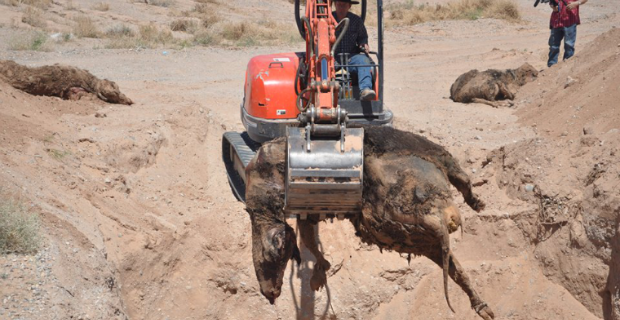 Report: Bundy Family Unearths BLM Mass Cattle Grave