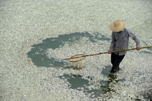 A resident clears dead fish from the Fuhe river in Wuhan, in central China's Hubei province on Sept. 3, 2013 / Image: AFP