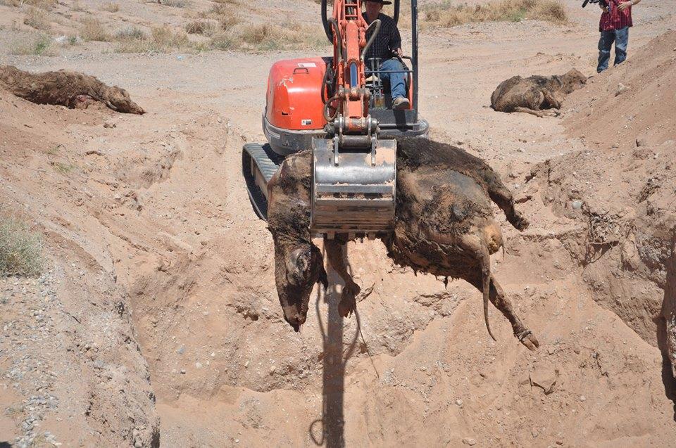 Image: Cattle Grave (Bundy Ranch Facebook).