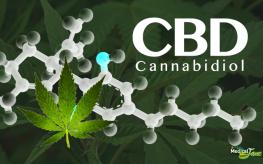 marijuana_cbd_pass-263x164