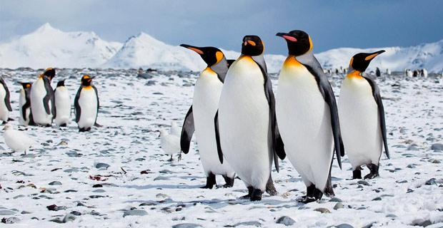 Credit: antarcticabound / Flickr